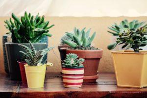 piante-per-terrazzo