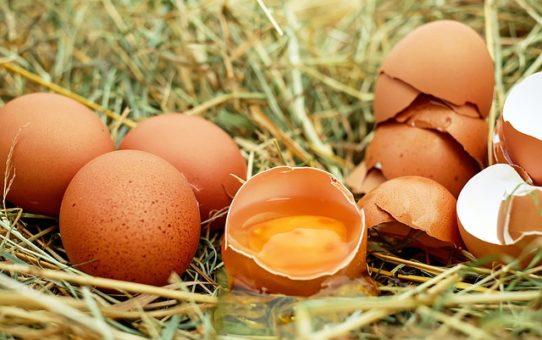E tu di che Uova sei?